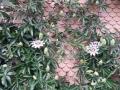 11b Blumenkleid beim Paradiesli